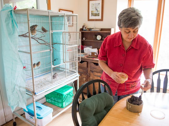 Wildlife rehabilitator Lynne McCoy feeds baby birds that she is rehabbing at her home in New Market.