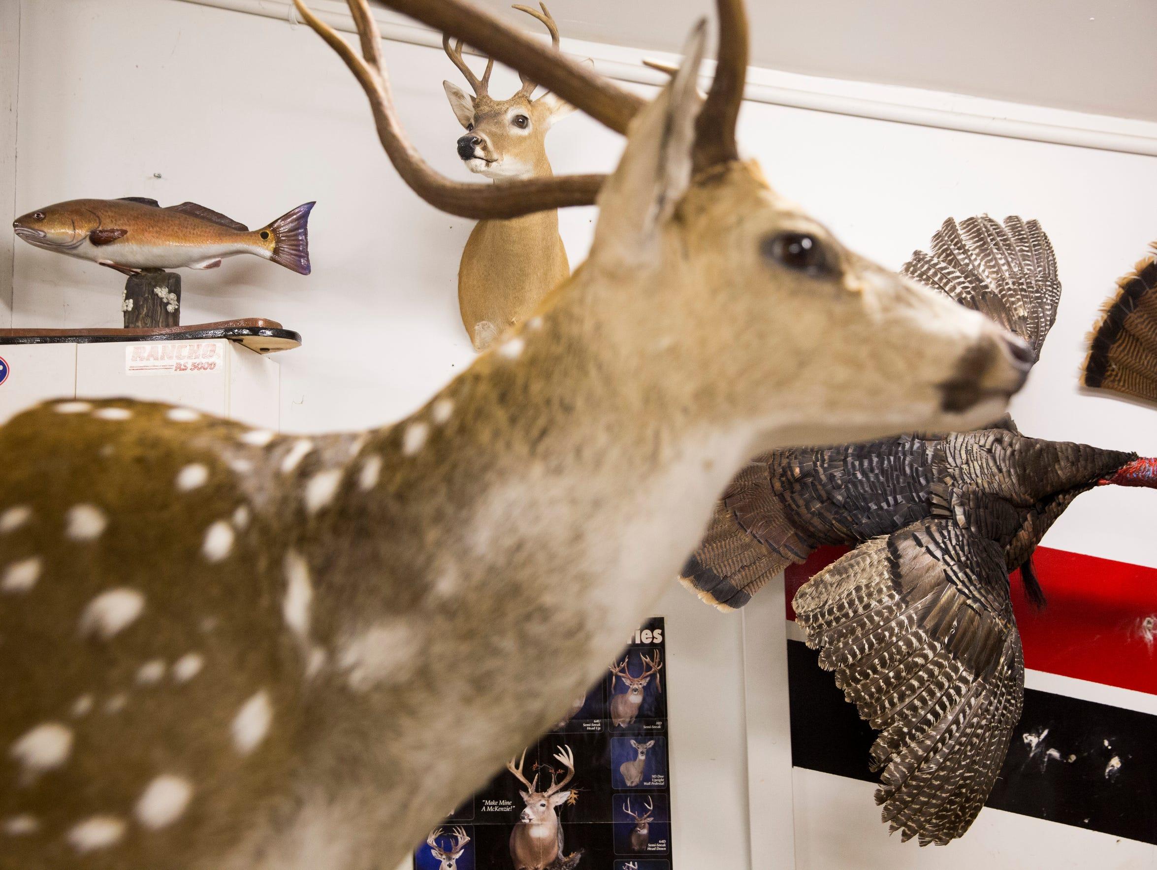 Taxidermied animals line the walls of Bob Dorta's garage