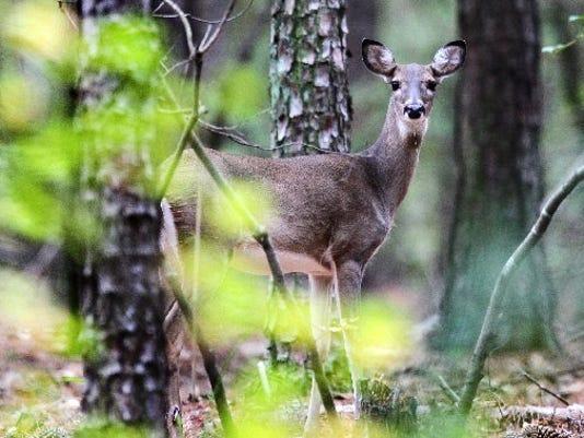 636135927267769049-deer-accidents-01.JPG
