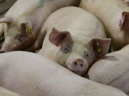 Gov. Asa Hutchinson announced Thursday that the C&H Hog Farm in Newton County would be ceasing operations under an agreement reached with the state.
