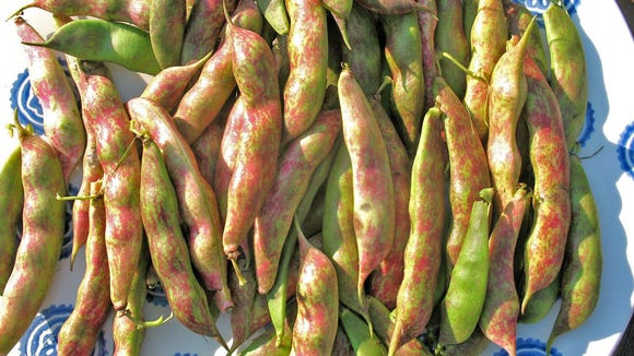 Fresh borlotto beans are wonderful in hearty soup recipes.