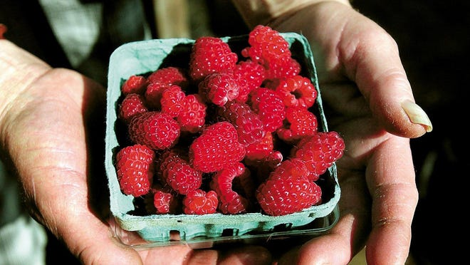 Raspberries are now in season at some area farms.