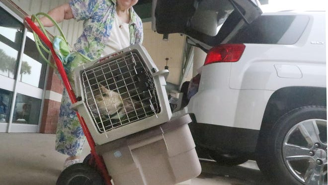 Evacuee Yvonne Truay and her cat Bebe in it's carrier joins others moving into the shelter at the Volusia County Fairgrounds, Monday September 2, 2019 as Hurricane Dorian moves closer.