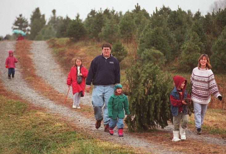 Text: Xmasprep /metro/ 11 30 96; The Orcutt Family Of. According To The Christmas  Tree Farm ...