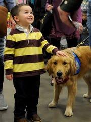 Elijah works as a comfort dog with the Lutheran Church