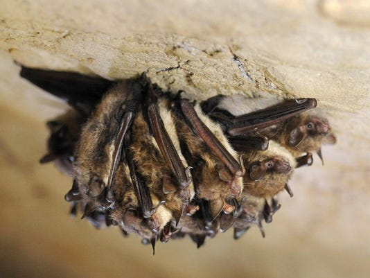 Bat Disease-Washington