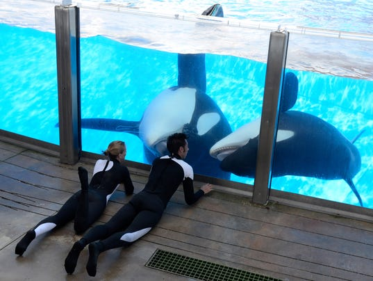 Tilikum, Kelly Flaherty Clark, Joe Sanchez
