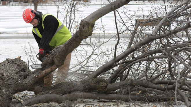 Chris Johnson, an arborist with the City of Neenah, cuts down a basswood tree at Riverside Park in January after it was damaged by wind and ice.