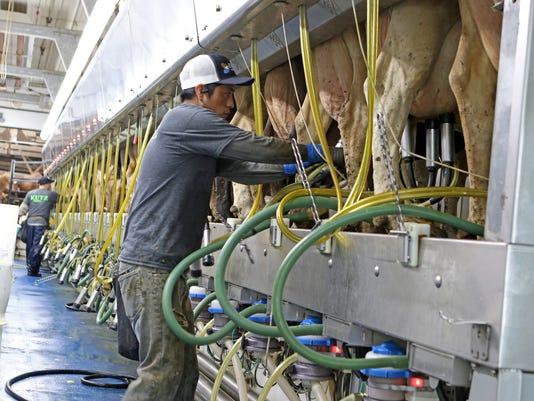 WSF 0511 Kutz dairy 15