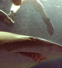 Shark Pictures!