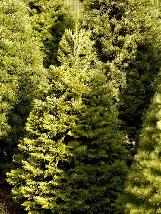 Steve Kreitzberg Chrismas trees