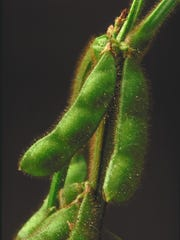DuPont soybeans