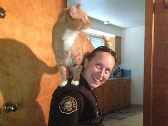 Cat on cop