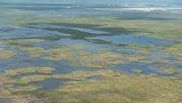 The South Florida Water Management District is backpumping water into Lake Okeechobee to help keep wildlife from drowning in flooded marshes.