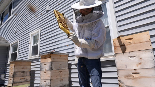 Gabe Lopez shows a portion of one of his hives last year at his home in Delta Township before he was asked to remove them. On Monday the Delta Township Board of Trustees will discuss whether an ongoing revision of its zoning ordinance should include measures that allow both beekeeping and chicken ownership in residential neighborhoods. The current ordinance doesn't allow either.