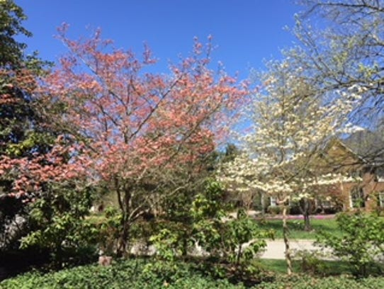 """Pink and white dogwood trees grace the yard. """"We loved"""