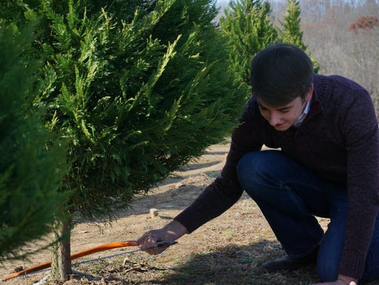 Will Baker kneels to cut down a Christmas tree at Bluebird