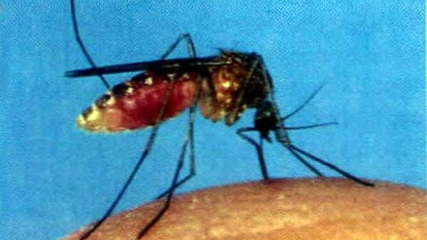 """""""West Nile virus is transmitted to humans from the bite of an infected mosquito,"""" said Ben Chan, state epidemiologist."""