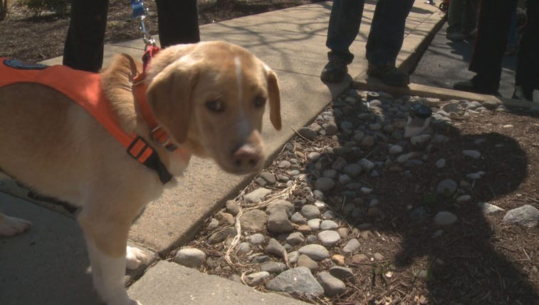 The North Shore Animal Rescue and Homeward Trails teamed
