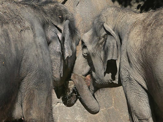 Why is cancer so rare in elephants? They might thank their 'zombie gene'