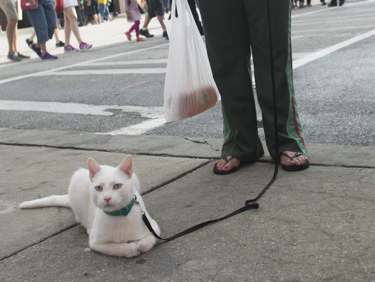 Candy Haney and her cat Zoom watch the crowd during