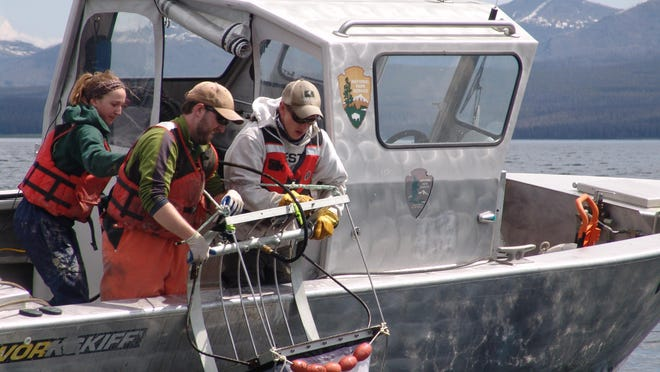 University of Vermont student Lee Simard, center, raises a device used to find lake trout spawning sites in Yellowstone Lake. Megan Euclide, left, and Jake Williams, right, help him.