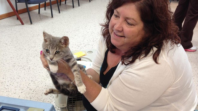 Belinda Cielecki picks up a cat she brought into the Humane Society of St. Clair County as part of a free roaming cat program.