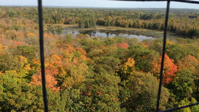 The view from Aiton Heights Fire Tower on Sunday in Itasca State Park revealed peak leaf color is still in the future in many parts of the park. Peak color is running about a week later than average in some parts of Minnesota.