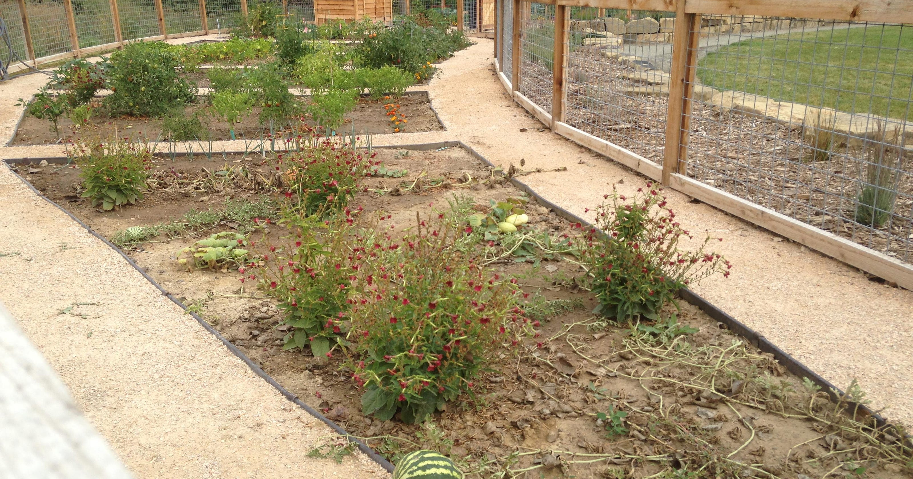 Fort Collins looks to grow more gardens in city parks