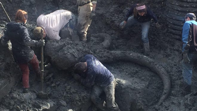 Crews work to excavate the skeleton of a woolly mammoth in Chelsea on Friday.
