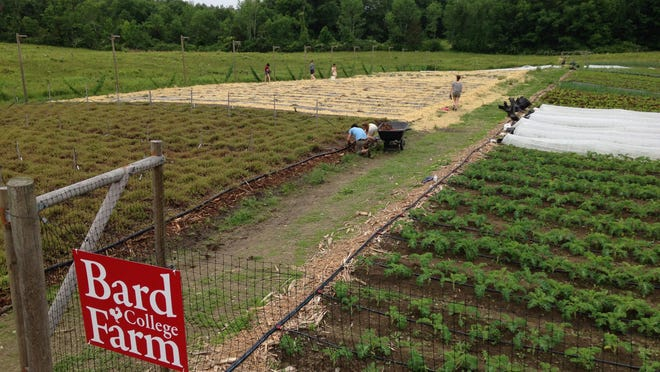 The Bard College Farm is a 1.25-acre sustainable urban farm where students organically grow fruit and vegetables to sell to Chartwells, the campus dining service.