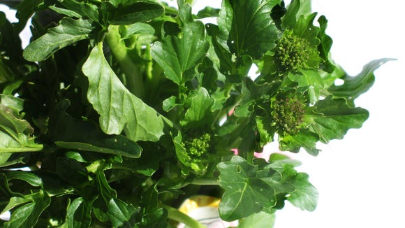 Wild rapini is packed with vitamins and minerals.