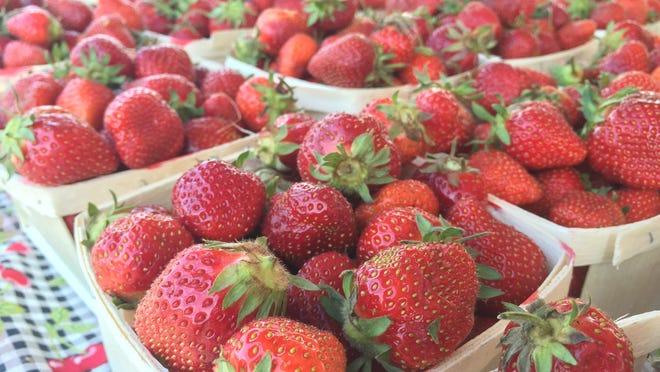 Michigan Strawberries are in season at the Farmington Farmers Market, headlining the third annual Strawberry Shortcake Celebration tis coming Saturday.