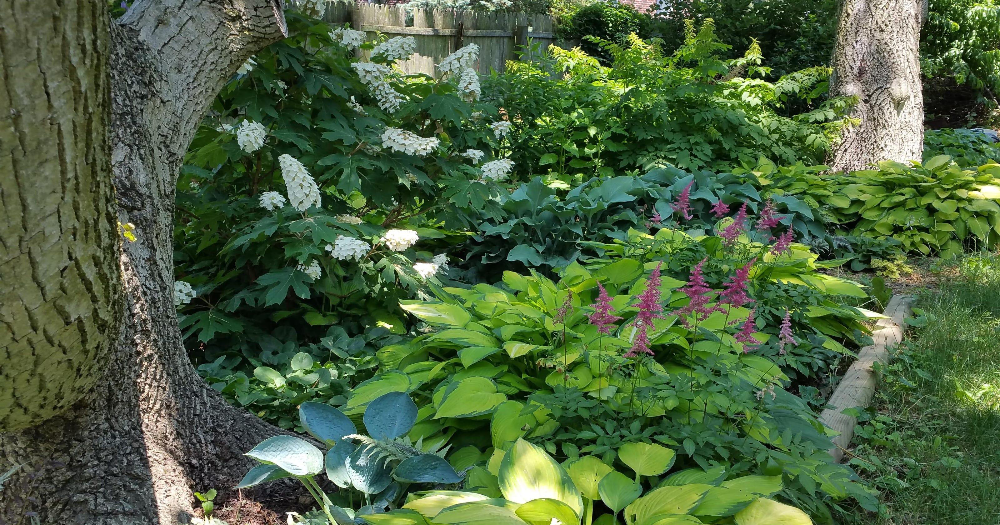 Gardening For Shade Work Area Raises More Than Hostas