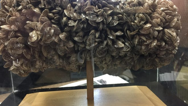 Quagga mussels from Lake Mead that are wrapped around a pipe was in a display case and passed around to lawmakers.