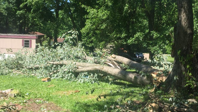 A large silver maple tree waits to be cut up at the Sefert residence on Crooked Run Road near New Philadelphia. It came down in Wednesday night's storm.