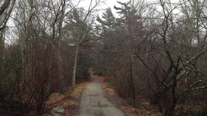 The Freetown State Forest is said to include many spooky areas.