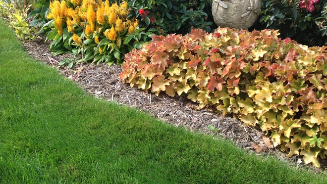 A full, lush lawn is your best defense against most common lawn problems. Keep your lawn healthy with routine fall lawn care and maintenance that will help grasses survive winter and emerge strong in spring.