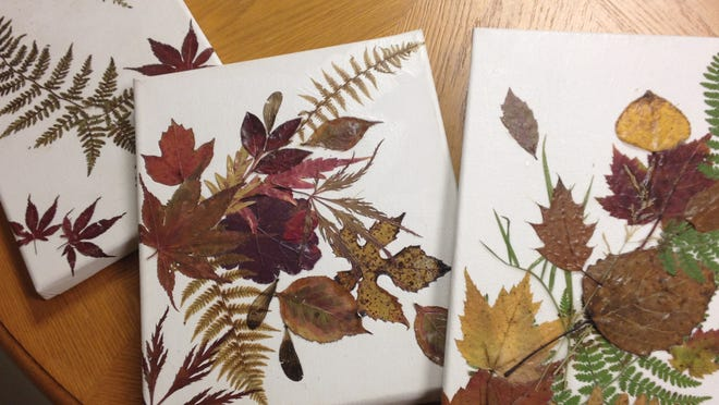 Decoupage colorful fall leaves and ferns onto canvas panels for beautiful works of natural art. All you need is some tacky glue spray, clear craft glue, panels and your gathered leaves.