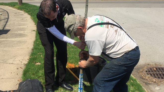 Fairfield Township board member Shane Weist and Tree Lafayette's Larry Rose plant the first of 12 trees that were planted along the easter fence of historic Greenbush Cemetery as part of Earth Day 2015.
