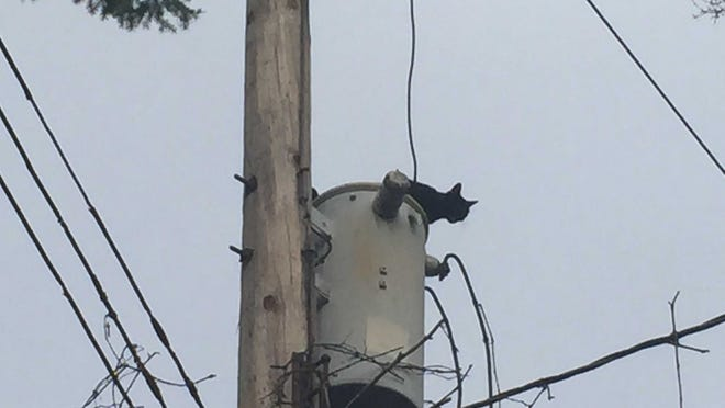 Until BWL turned off the primary line to the pole, Mister was within a whisker of 2,400 volts.