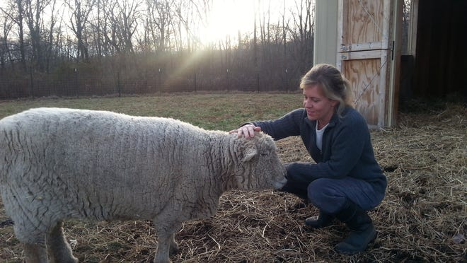 Colleen Puelsch works as a veterinary technician 30 hours a week and the rest of her days are spent establishing her six acre farm in Middle Valley. She currently raises sheep, chickens, honey bees and vegetables and hopes to work as a full time farmer in the years to come.