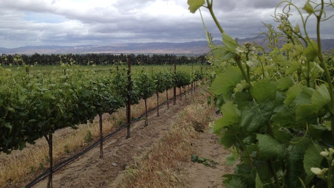 Wine-grape growers would be able to plant vines on steeper slopes that what is typically viewed in the Salinas Valley.