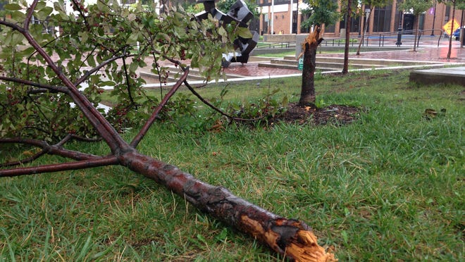 A woman was cited by police for allegedly chopping down a tree Sunday night on Park Central Square.