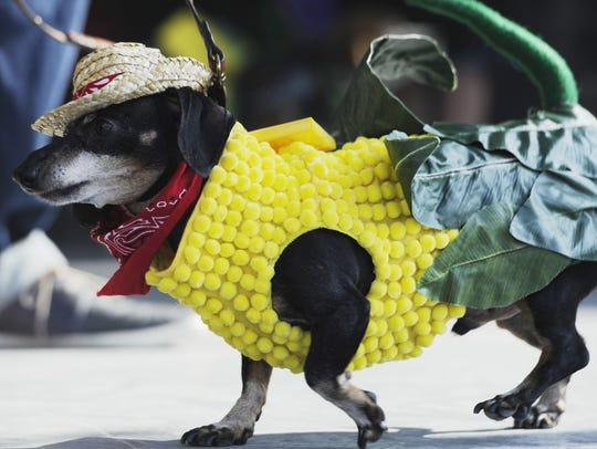 Dog costume contest during the 31st annual Pumpkinfest
