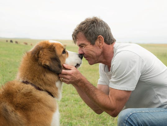 Is A Dog S Purpose Good Or Bad Movie