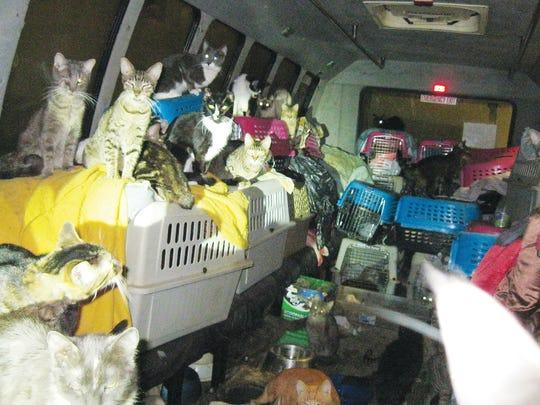 68 Cats in Van