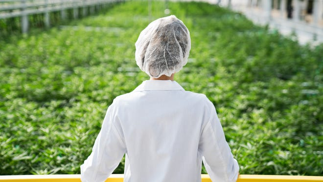 Liberty Health Services, which has marijuana-cultivation facilities in Alachua, is planning to open a medical-marijuana dispensary in Port St. Lucie.