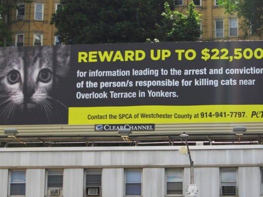 Cat billboard