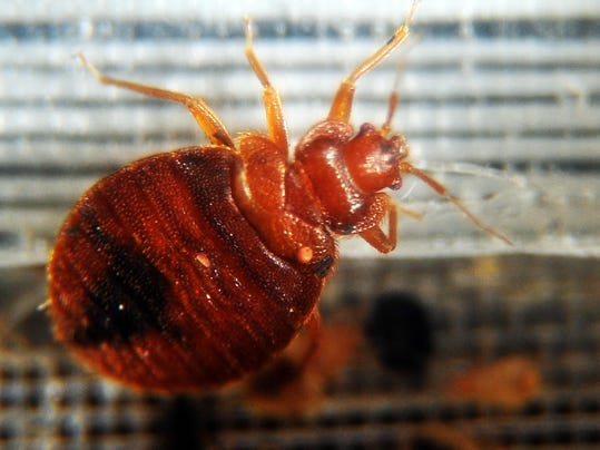 Can Bed Bugs Crawl Up Through Sheets